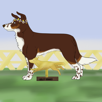 Agility winner - Will by Alcemistnv