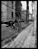 Barbed Wire by SurfGuy3