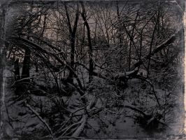 Winter forest by jfdupuis