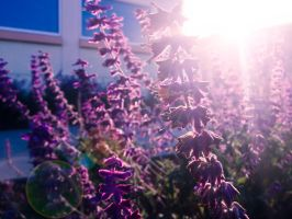 Some purple flowers. by kath660