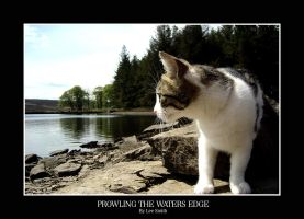 Prowling the waters edge by lmsmith