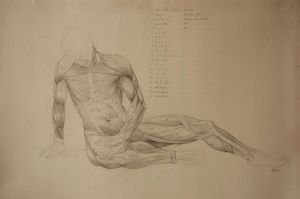 Dying Gaul Anatomy Study by NightmareGK13