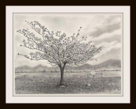 Cherry Tree Pencil Drawing by aakritiarts