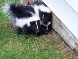 3 Of 7 Skunks by Pholve