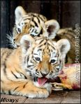 Two baby tigers are better than one baby tiger by woxys
