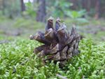 A lonely pinecone by MrBeholder