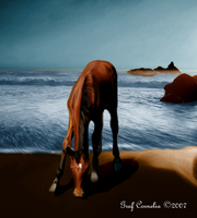 The horse and the sea by Conny4444