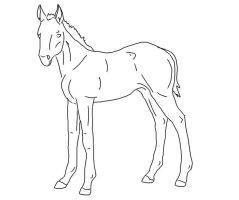 foal line art 2 by AhernStables
