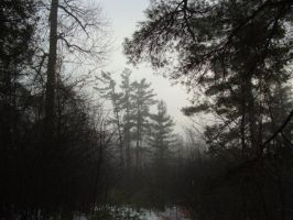 Misty Forest by Tantas