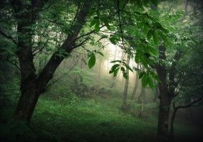 Mystic Woods by MadeliefArt