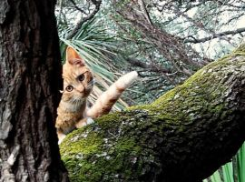 Curious Kitten by tinaowl
