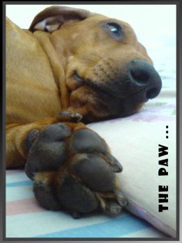 the paw by Ecaterina13
