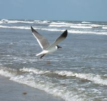 GULL AND SEA by CorazondeDios