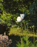White Flower 1 by aaron5153