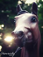 Forest Eclipse by EquusInspiration