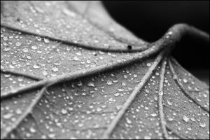 drops on a fallen leaf by mescamesh