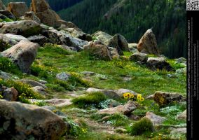 Alpine Tundra and Wildflowers by DamselStock