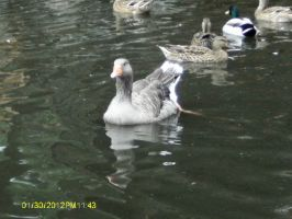 Mystic Village Geese 2 by OokamiAikouka