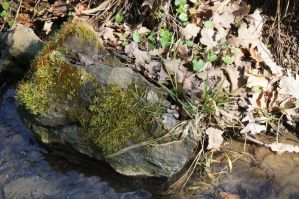Mossy stone by Mecarion