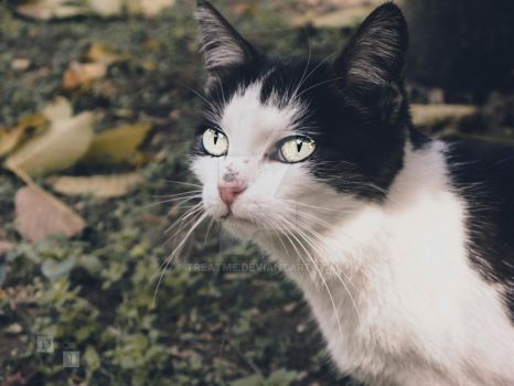 a Cat by treatme