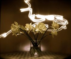 Light painted flowers by Gib-Art-and-Pinups