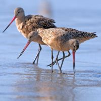 In Godwit Land by clippercarrillo