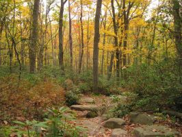 Fall Forest 5 by Salamander-Stock