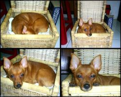 Corel in a rattan box by emmil
