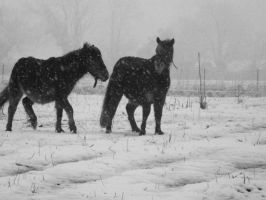 Under the snow V by Mayiaaa