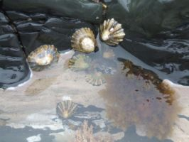 Limpets and A Rockpool by Haybop