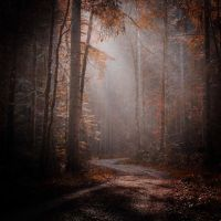 A Walk In The Fog... by ulivonboedefeld
