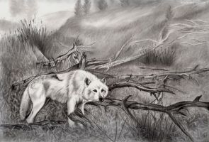 The Lone White Wolf by CatBeast17