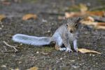 Baby Squirrel by masimage