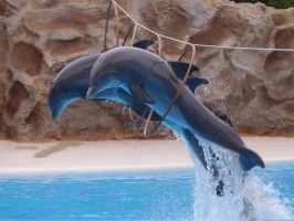 dolphin10 by pepe1973