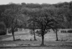 first day of spring II black and white by Tjabula