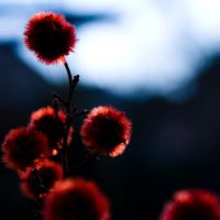 red by JustMyWay