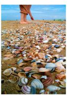 Also a lot of shells by Effira