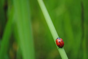 Ladybug in the grass 2 by Makachop128