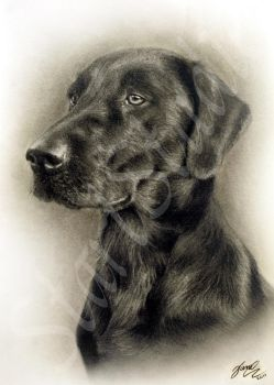 Dog Drawing 2 by JamiePickering