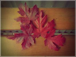 Maple 3 by Nuce-Photography