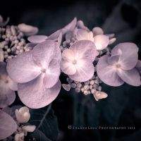 Delicate by SharonLeggDigitalArt