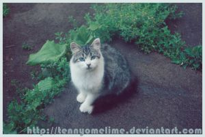 Blue Eyed Cat by tennyomelime