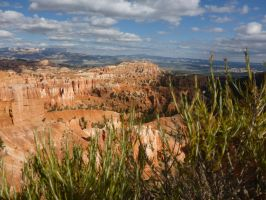 Bryce Canyon by NaturalBeauty-Photos