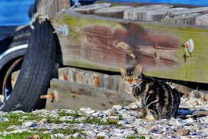 Kitty at the Warf by SalemCat