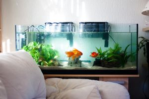 Goldfish Tank by EmeraldRosepetal