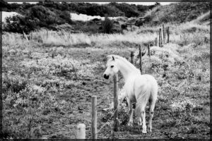 Horse on Heathland by millsnickdave