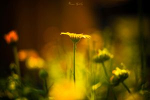 yellow..... by AnnaForestali