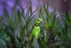 green lizard by artistmore