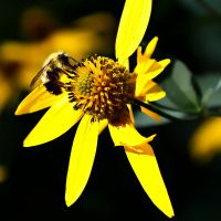 Yellow Flower with Passenger by dkwynia