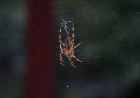 Spider on web3 by LeafsStock